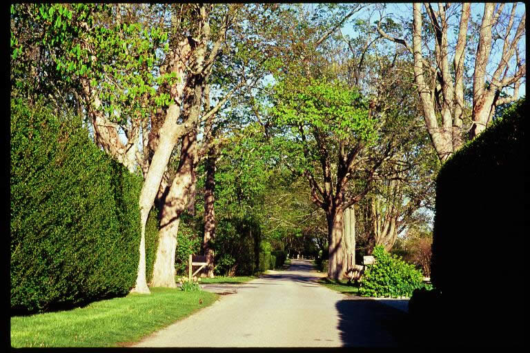 Jeffreys Lane with trees on either side of the street